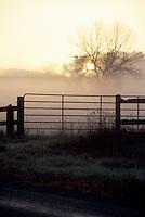 Farm Gate Silhouette against Misty Sunrise