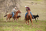 "Cattle marking at the Yeager and 110 ranches along Stony Creek Road with the Dell""Orto Ranch"