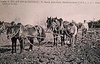 Europe/France/Centre/37/Indre-et-Loire/Vouvray: Ecomusée - Vieille carte postale - Scène de labour traditionnel et préparation des terres