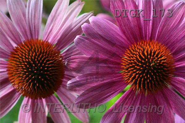 Gisela, FLOWERS, photos(DTGK173,#F#) Blumen, flores, retrato