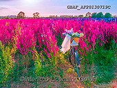 Assaf, CUTE ANIMALS, LUSTIGE TIERE, ANIMALITOS DIVERTIDOS, teddies, paintings,+Basket, Bicycle, Bicycles, Bike, Bikes, Color, Colour Image, Delphinium, Field, Floral, Flower, Flowers, Love, Multicolored,+Multicoloured, Photography, Romace, Romance, Romantic, Wedding, Wedding Vale,Basket, Bicycle, Bicycles, Bike, Bikes, Color, C+olour Image, Delphinium, Field, Floral, Flower, Flowers, Love, Multicolored, Multicoloured, Photography, Romace, Romance, Rom+antic, Wedding, Wedding Vale+,GBAFAF20130719C,#ac#, EVERYDAY ,photos,photo