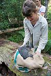 Felicia Pereoglou Releasing Mountain Brushtail Possum