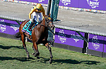 November 1, 2019 : Four Wheel Drive, ridden by Irad Ortiz Jr., wins the Breeders' Cup Juvenile Turf Sprint on Breeders' Cup Championship Friday at Santa Anita Park in Arcadia, California on November 1, 2019. Chris Crestik/Eclipse Sportswire/Breeders' Cup/CSM