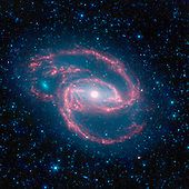"Pasadena, CA - July 23, 2009 -- The National Aeronautics and Space Administration's (NASA) Spitzer Space Telescope has imaged a wild creature of the dark -- a coiled galaxy with an eye-like object at its center. The galaxy, called NGC 1097, is located 50 million light-years away. It is spiral-shaped like our Milky Way, with long, spindly arms of stars. The ""eye"" at the center of the galaxy is actually a monstrous black hole surrounded by a ring of stars. In this color-coded infrared view from Spitzer, the area around the invisible black hole is blue and the ring of stars, white. The black hole is huge, about 100 million times the mass of our sun, and is feeding off gas and dust along with the occasional unlucky star. Our Milky Way's central black hole is tame in comparison, with a mass of a few million suns. The ring around the black hole is bursting with new star formation. An inflow of material toward the central bar of the galaxy is causing the ring to light up with new stars. The galaxy's red spiral arms and the swirling spokes seen between the arms show dust heated by newborn stars. Older populations of stars scattered through the galaxy are blue. The fuzzy blue dot to the left, which appears to fit snuggly between the arms, is a companion galaxy. Astronomers say it is unclear whether this companion poked a hole in the larger galaxy, or just happens to be aligned in a gap in the arms. Other dots in the picture are either nearby stars in our galaxy, or distant galaxies. This image was taken during Spitzer's cold mission, before it ran out of liquid coolant. The observatory's warm mission is ongoing, with two infrared channels operating at about 30 Kelvin (minus 406 degrees Fahrenheit). .Infrared light with a wavelength of 3.6 microns is blue; 4.5-micron light is green and 8.0-micron light is red. The contribution from starlight measured at 3.6 microns has been subtracted from the 8.0-micron image to enhance the visibility of the dust features. .Credit: NASA/JPL-"