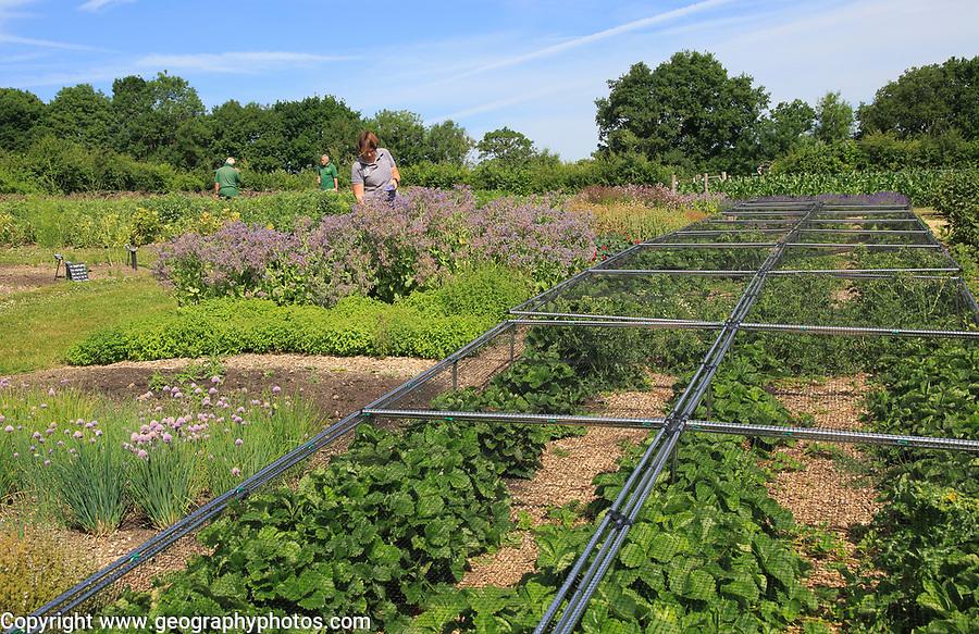 Workers in the vegetable garden, Sissinghurst castle gardens, Kent, England, UK