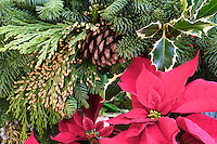 Pointsettia and Christmas wreath.