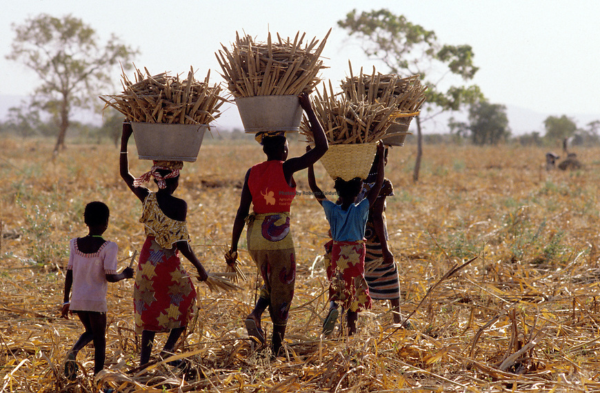 Women carrying backets full of millet for processing