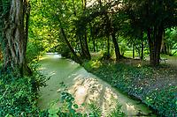 France, Indre-et-Loire (37), Amboise, château Gaillard, l'Amasse en sous-bois couverte de lentilles d'eau
