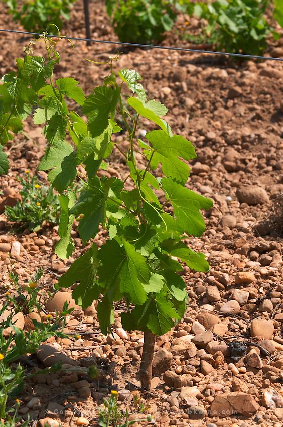 marsanne vineyard mas du notaire rhone france