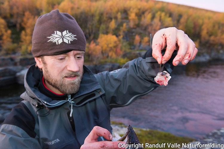 Ørret fisket med ørretfilet som agn. ---- Trout caught on trout filet.