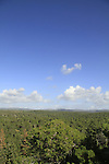 Israel, Mount Carmel, a view of Hof HaCarmel forest