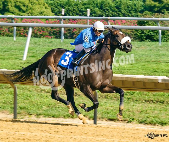 Bellinbusto winning at Delaware Park on 9/5/16