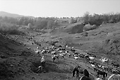 Jimbar, Transylvania<br /> Romania<br /> April 30,1992<br /> <br /> Taking the cows out to pasture.