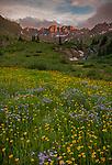 San Juan Mountains, CO<br /> American Basin with Colorado columbine (Aguilegia coerulia) and wildflower meadows beneath Handies Peak