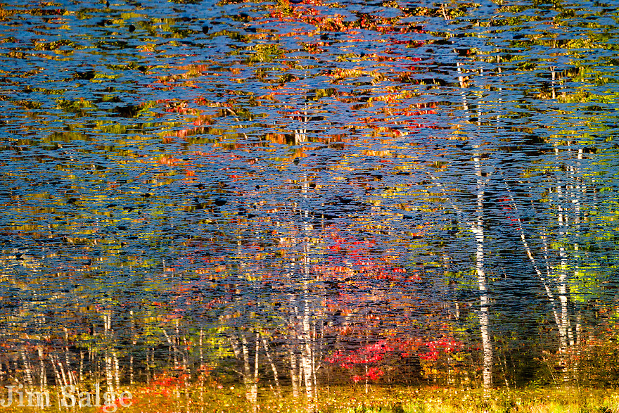 A reflection of a swamp maple and birch grove is broken up by lily pads.