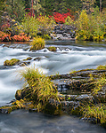 Rogue River National Forest, OR: Sedges along the basalt banks of the Rogue River in fall. Part of the Rogue-Umpqua Scenic Byway.