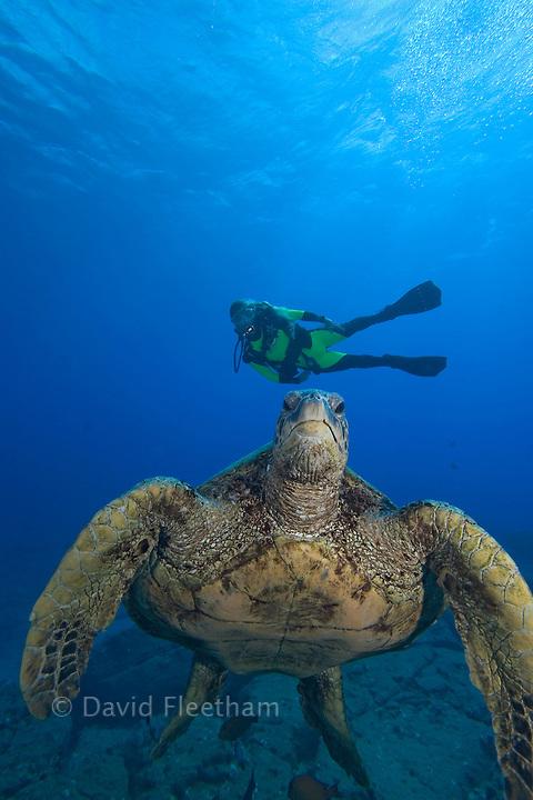 Green sea turtle, Chelonia mydas, and diver (MR).  Kauai, Hawaii.