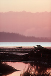 Puget Sound, Skagit Estuary, Olympic Mountains, Sunset, Washington State, Pacific Northwest, USA,..