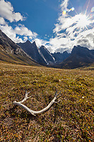 Caribou antler on the tundra, East and West Maiden and Camel peaks in the distance, Arrigetch Peaks, Gates of the Arctic National Park, Alaska.