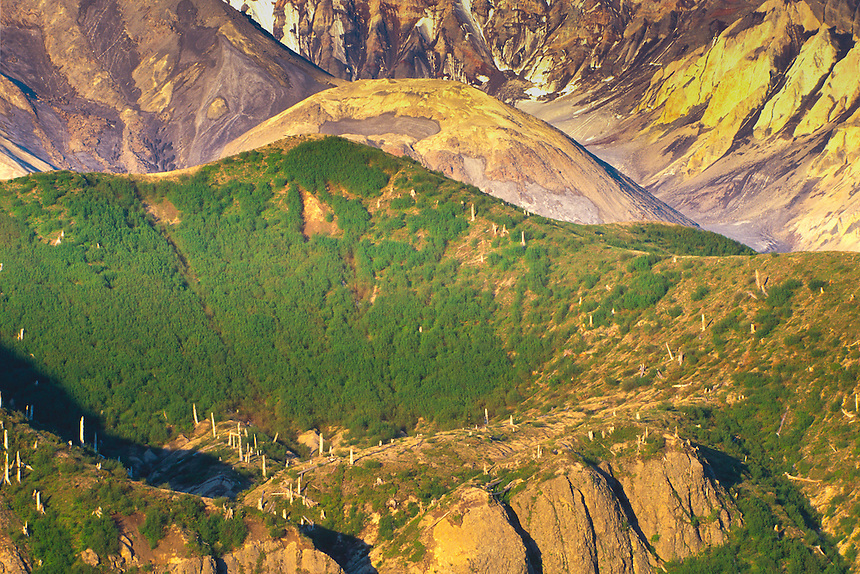 Old Crater Dome from Windy Ridge, Mt. St. Helens National Volcanic Monument, Washington, US