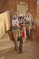 Tourists riding elephants up to Amber Fort, Jaipur, India.