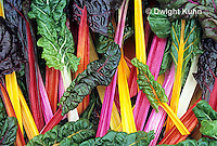 HS80-010z  Bright Lights Swiss Chard or Multicolor Chard