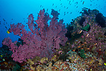 Colorful Reefs at Canyons