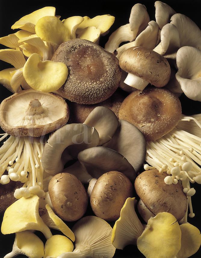 An assortment of exotic mushrooms - Enoki, Crimini, Shitake, Oyster, Trumpet.
