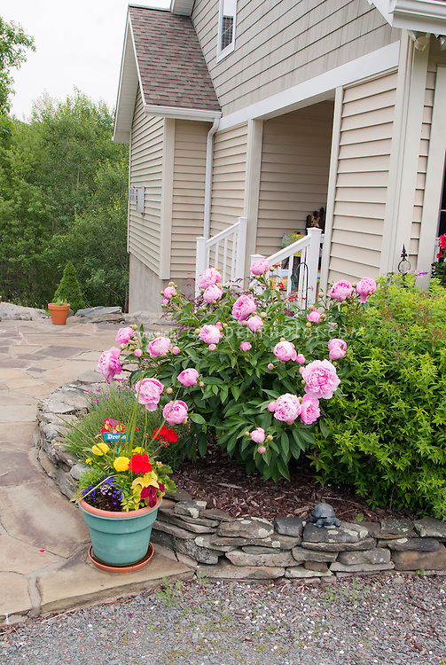 Entrance Patio Garden With Pot Container And Peony