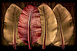Red Banana Leafs