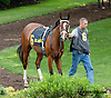 Hop the Six before The White Clay Creek Stakes at Delaware Park on 7/27/13