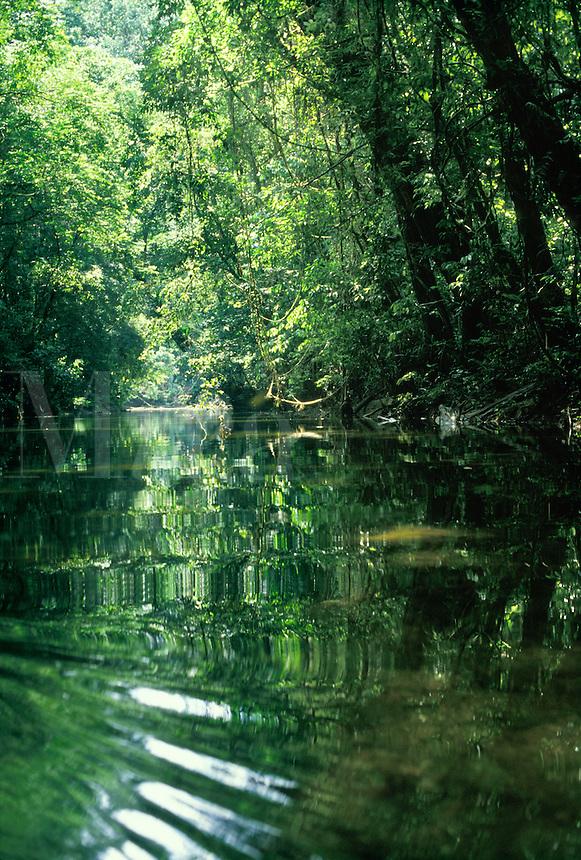 Small river in rainforest, Gunung Mulu National Park, Malaysia, Borneo, Sarawak