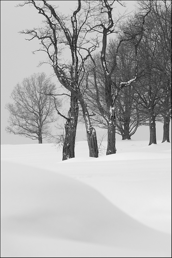 Winter scenes in black and white | Artistic Pursuits - Photography