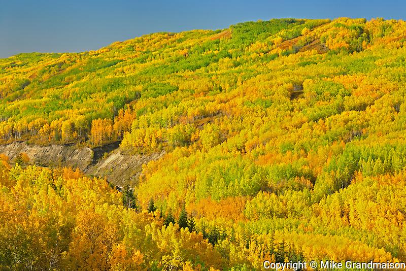 Colorful autumn foliage in hills <br /> Dunvegan<br /> Alberta<br /> Canada