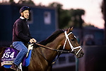 OCT 28: Breeders' Cup Filly & Mare Sprint entrant Dawn the Destroyer, trained by Kiaran P. McLaughlin,  at Santa Anita Park in Arcadia, California on Oct 28, 2019. Evers/Eclipse Sportswire/Breeders' Cup