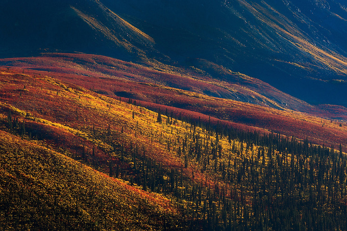 Autumn-colored tundra blanket Tombstone Valley, Yukon Territory.