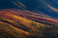 Autumn-colored tundra blanket Tombstone Valley, Yukon Territory.