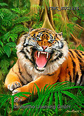 Marcello, REALISTIC ANIMALS, REALISTISCHE TIERE, ANIMALES REALISTICOS,tiger,tigers, paintings+++++,ITMCEDC1126,#a#, EVERYDAY