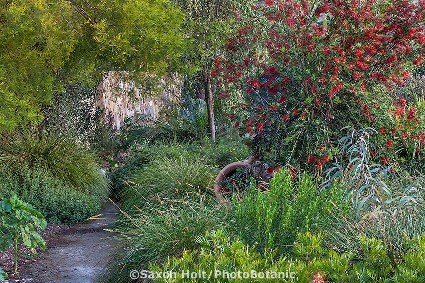 Path through summer-dry drought tolerant garden with Callistemon 'Slim', red flowering shrub; Australian Native Plant Nursery, Ventura, California