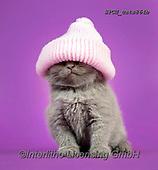 Xavier, ANIMALS, REALISTISCHE TIERE, ANIMALES REALISTICOS, cats, photos+++++,SPCHCATS864B,#a#, EVERYDAY