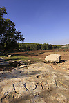 Israel, Lower Galilee, the Sabbath Stone in Kiryat Ata forest