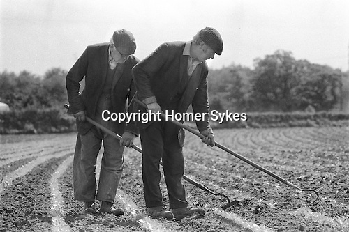 Suffolk Uk. Two farm labours hoe a field. 1970s rural countryside Britain. ..