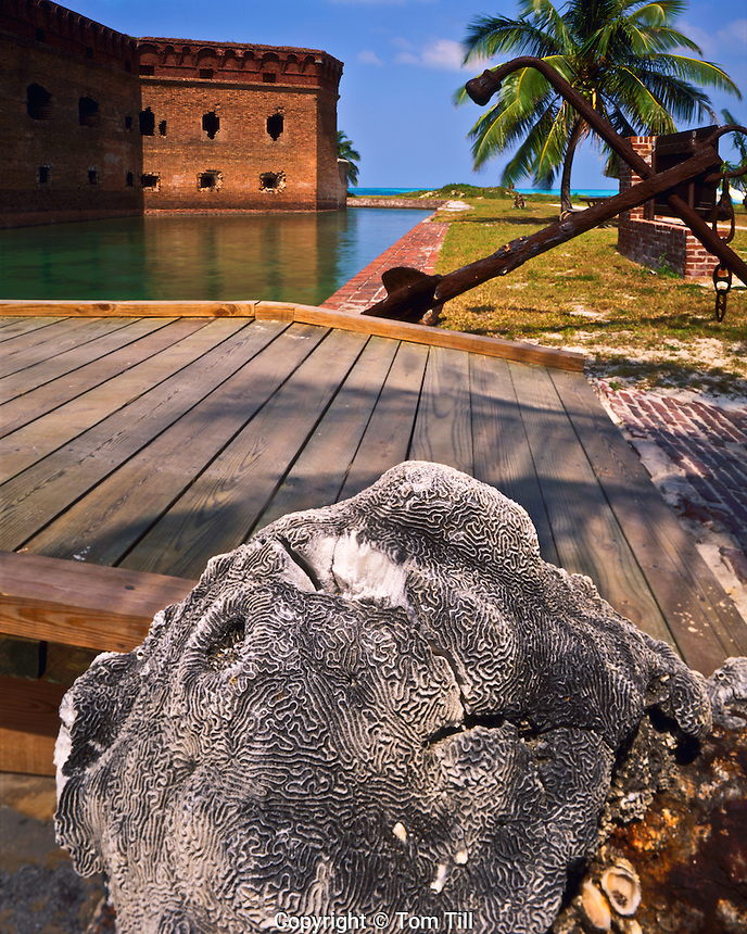 Coral & Fort Jefferson, Largest of 19th Century Coastal Forts, Florida Keys, Gulf of Mexico, Dry Tortugas National Park, Florida