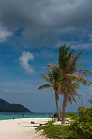 Palm tree on Sunrise beach, Ko Lipe, Thailand