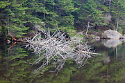 Reflection of dead tree in Upper Greeley Pond in the White Mountains, New Hampshire USA.
