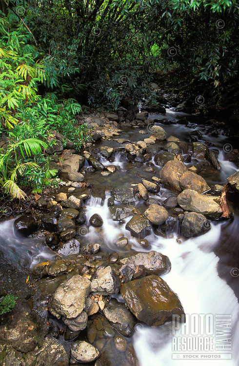 Gentle stream flows through the jungle and lush greenery of the Hamakua Coast on the Big Island of Hawaii.