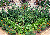 Vegetables in Garden