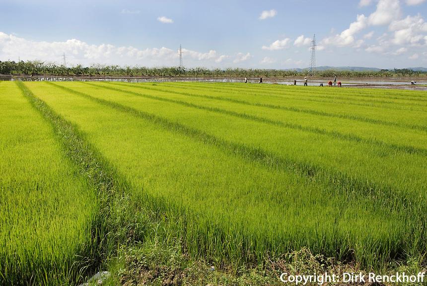 Dominikanische Republik, Reisfelder bei Nagua im Nordosten