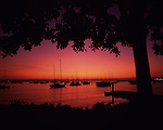 Silhouetted sailboats and tree along San Diego bay waterfront, sunset light, San Diego, California USA