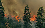 Yosemite National Park- July 27, 2014--El Portal Fire--4,198 acres treating the communities of Foresta, El Portal and the Merced Sequoia Grove.  1,194 personnel on the fire.  Photo By Al Golub/Golub Photography
